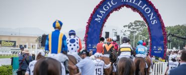 Horses in the mounting yard of the Magic Millions Carnival on the Gold Coast