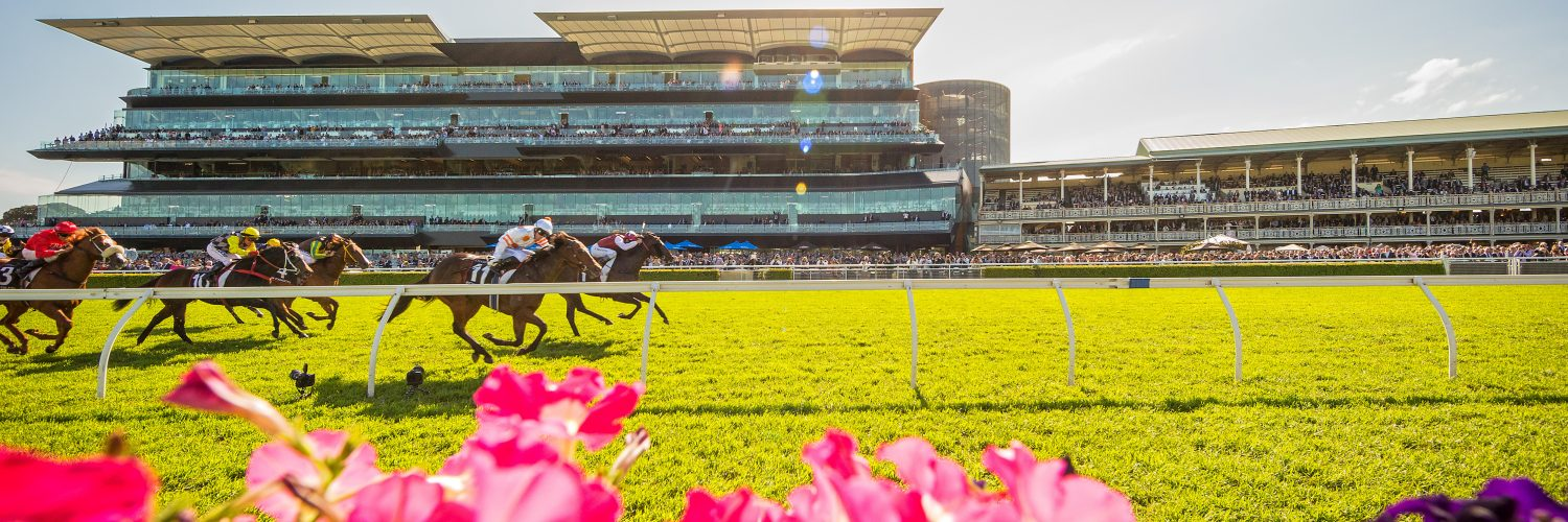 Horses racing past a flower bed at Royal Randwick Sydney