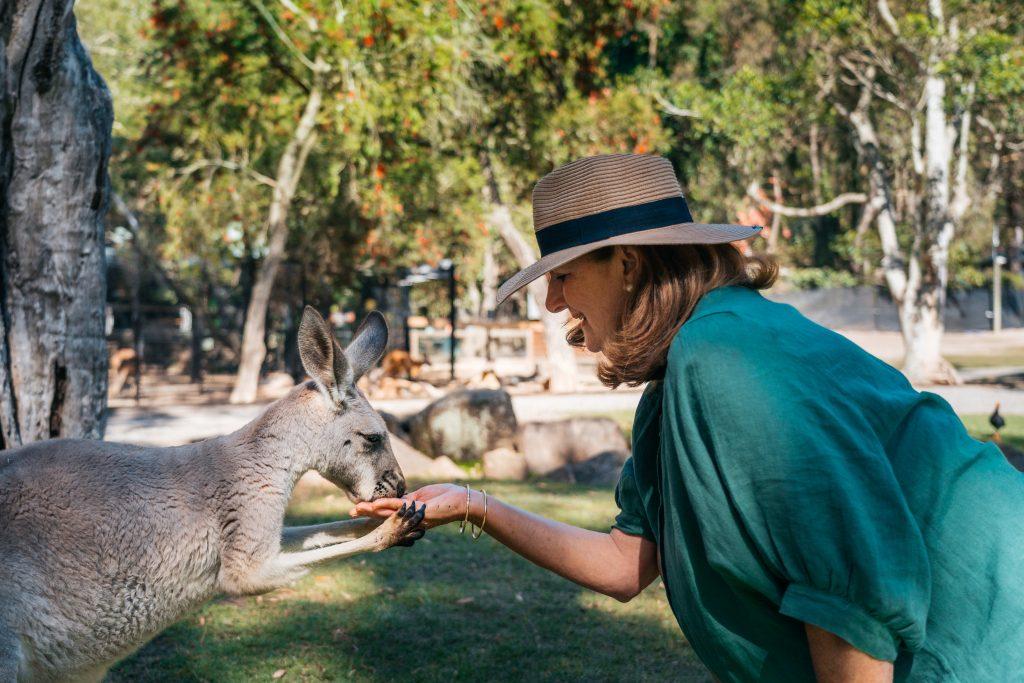Feeding a kangaroo at Currumbin Wildlife Sanctuary