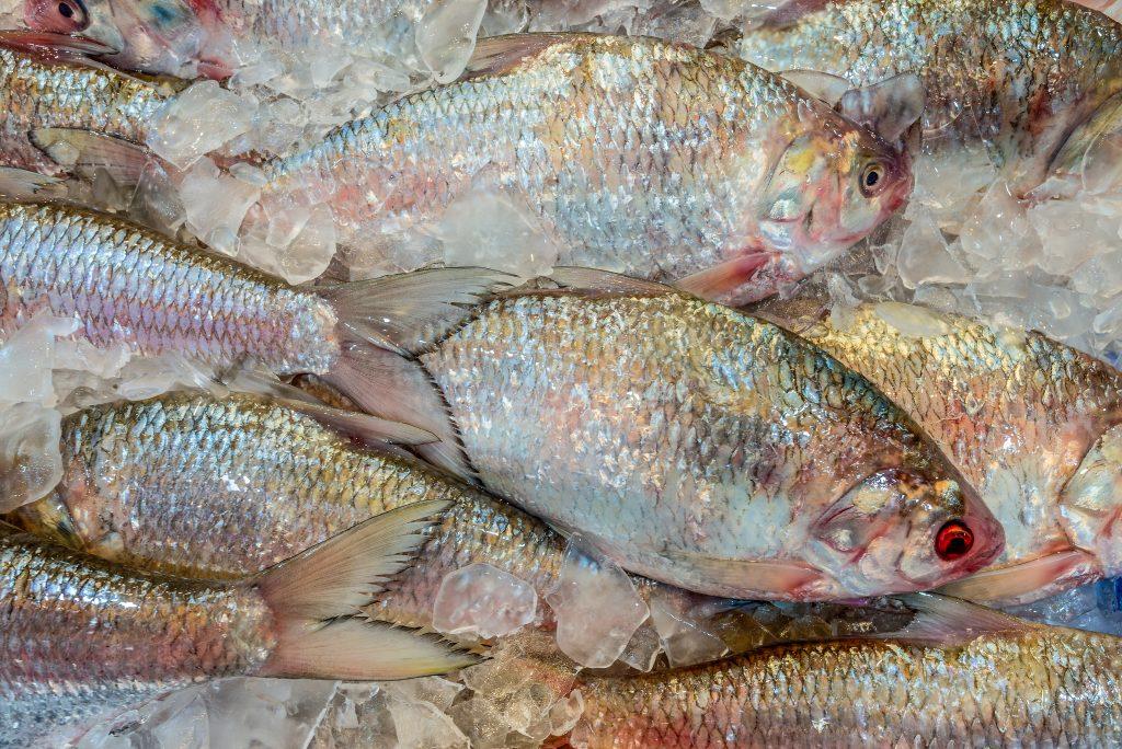 Raw fresh fish on ice at the fish market