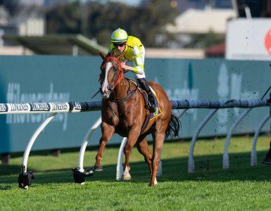 The Star Horse - Eduardo and Champion Jockey Nash Rawiller